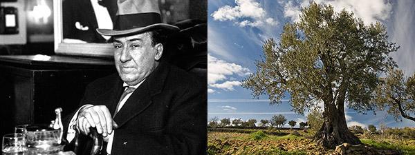 El poeta Antonio Machado junto a la imagen de un olivo solitario.